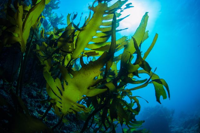 「海藻が薄毛に良い」というのは本当なの?噂の真相を徹底解説